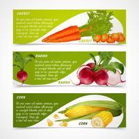 Bannières de carottes de radis de maïs
