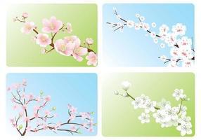 Pack vecteur de fond d'écran Cherry Blossom