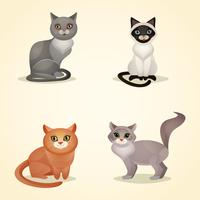 Ensemble de chat isolé