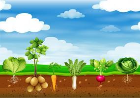 Légumes frais dans le sol vecteur