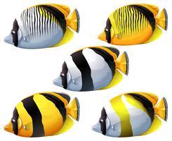 Cinq poissons colorés vecteur