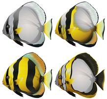 Quatre poissons vecteur