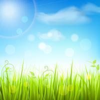Affiche de ciel bleu d'herbe de prairie de printemps