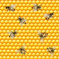 Modèle sans couture d'abeille à miel vecteur
