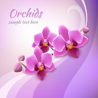 Modèle de fond d'orchidée