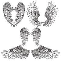 Ensemble de croquis d'ailes vecteur