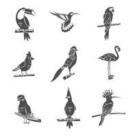 oiseau noir icônes définies vecteur