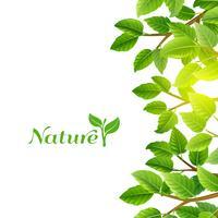 Feuilles vertes fond nature impression