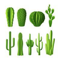 Ensemble réaliste de cactus vecteur