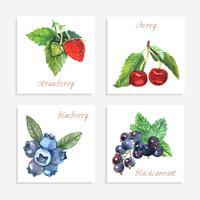 cartes papier berry vecteur