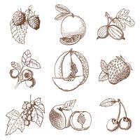 Ensemble de fruits et fruits dessinés à la main vecteur