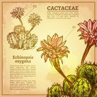 Illustration botanique de cactus vecteur