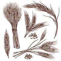 Ensemble de croquis de blé vecteur