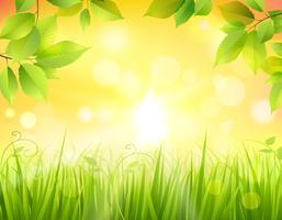 Lever de soleil en forêt