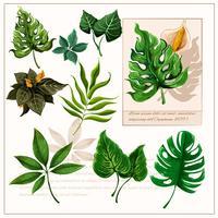 Ensemble de pictogrammes feuilles tropicales vertes vecteur