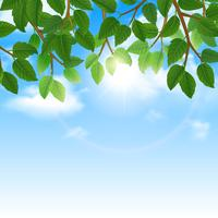 Feuilles vertes et bordure de fond de ciel