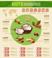 Infographie des noix réalistes vecteur