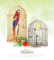 Fond d'affiche de marché aux oiseaux vecteur