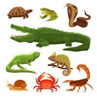 Ensemble De Reptiles Et Amphibiens vecteur