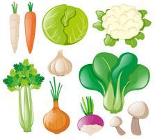 Différents types de légumes frais vecteur
