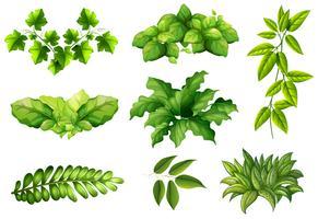 Ensemble de plantes de la nature