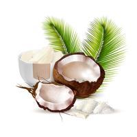 Illustration réaliste de noix de coco vecteur