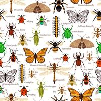 Modèle sans couture d'insectes vecteur