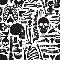 Modèle de squelette d'os humains vecteur