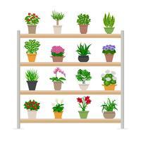 Plantes d'intérieur sur les étagères Illustration vecteur