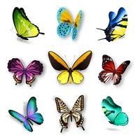 Ensemble papillon réaliste vecteur
