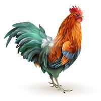 Coq rouge coq, vue côté, résumé vecteur