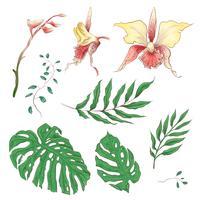 Orchidée Fleurs tropicales éléments floraux en main dessiner Style. Vecteur