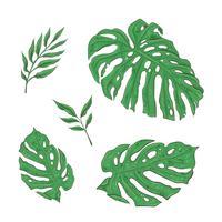 Ensemble lumineux de feuilles tropicales vertes. Vecteur