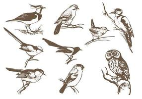 Pack de vecteur d'oiseau gravé