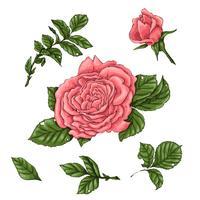 Définir des roses de corail. Main, dessin d'illustration vectorielle