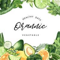 Cadre organique aquarelle de légumes verts, concombre, pois, brocoli, céleri, en bonne santé avec un design texct, illustration vectorielle aquarelle