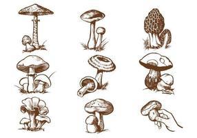 Ensemble vectoriel à champignon dessiné à la main