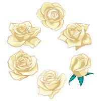 Fleurs roses, boutons et feuilles vertes. Collection de Roses Set. icône rose et symbole vecteur