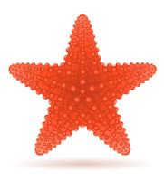 illustration vectorielle étoile de mer