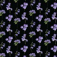 lavande violet botanique sur fond noir