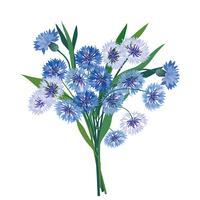 Bouquet de fleurs. Cadre floral. Carte de voeux s'épanouir. Fleurs épanouies isolés sur fond blanc vecteur