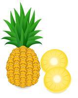 ananas vecteur