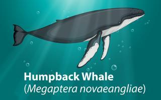 Baleine à bosse dans l'océan profond vecteur