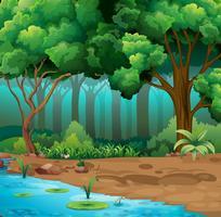 Rivière courir à travers la jungle