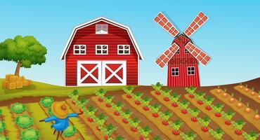 Terres agricoles avec des cultures à la ferme