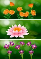 Design de fond avec différents types de fleurs vecteur