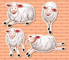 Moutons ensemble