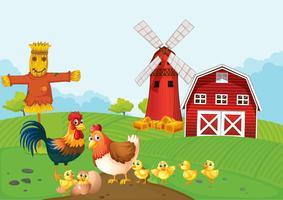 Poulets sur les terres agricoles vecteur
