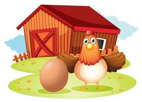 Une poule et un oeuf dans la cour