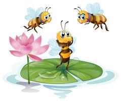 Lotus et les abeilles vecteur